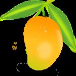 mango_PNG9180