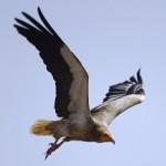 Vulture dadi maa ki kahaniya (कहानिया)