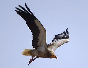 Photo of गिद्ध की उड़ान Dadima Ki Kahaniya, Dadi maa Ki Kahani in Hindi