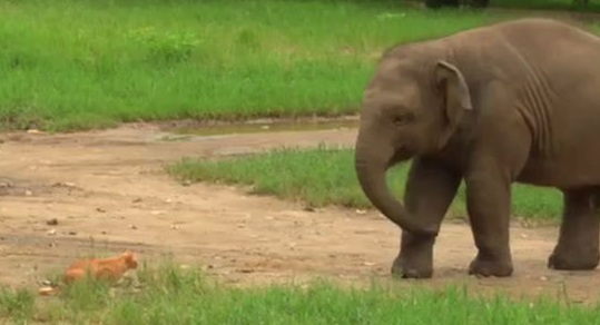 Pregnant Elephant Story in Hindi
