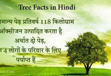 Photo of पेड़ों से जुड़ी 17 अद्भुत बातें | 17 Amazing Tree Facts in Hindi