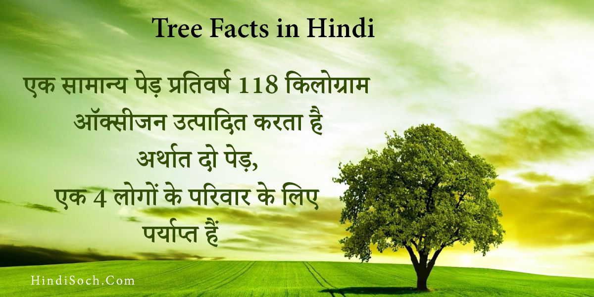 Tree Facts in Hindi
