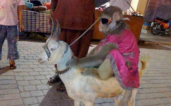 Farmer Technology Indian Funny Images Funny Animals Images India