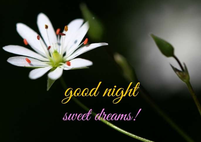 Good Night SMS for Someone Special