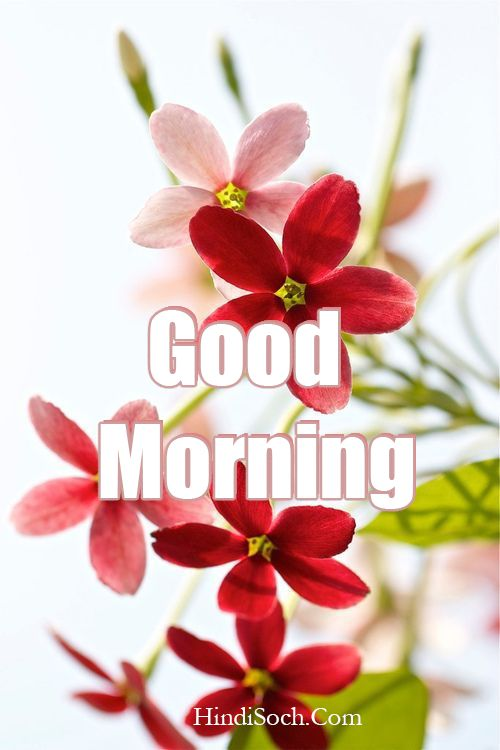 Beautiful Good Morning Images for Friends