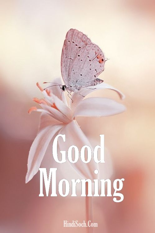 Flowers Good Morning Images Photos Download