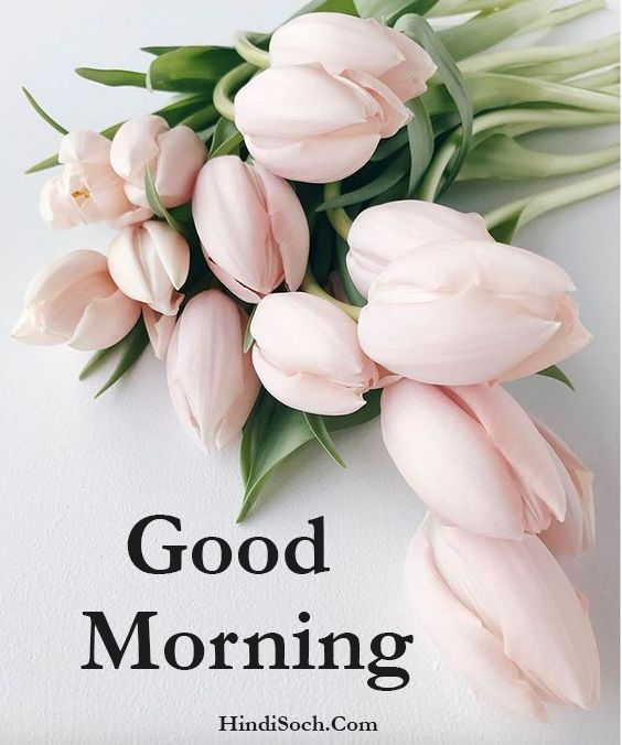 Flowers Good Morning Wishes Images for Whatsapp