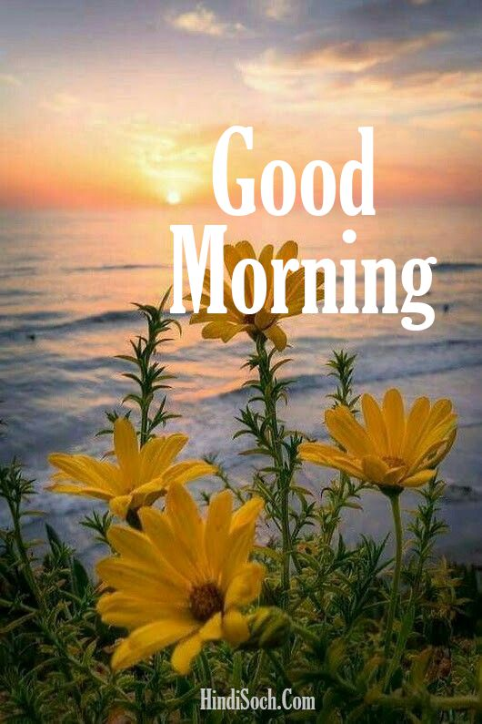 Good Morning Images Photos Download for Whatsapp