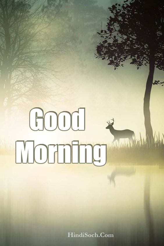 Good Morning Nature Images with Wishes