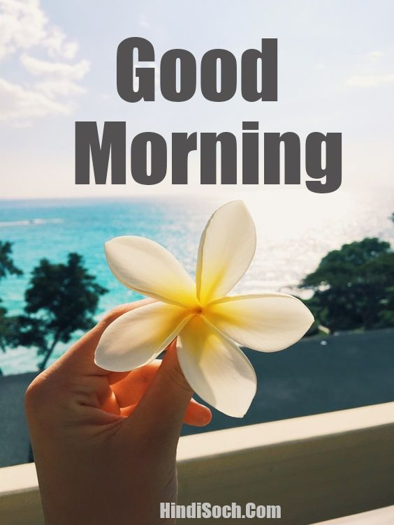 Good Morning with Flowers Images Wishes
