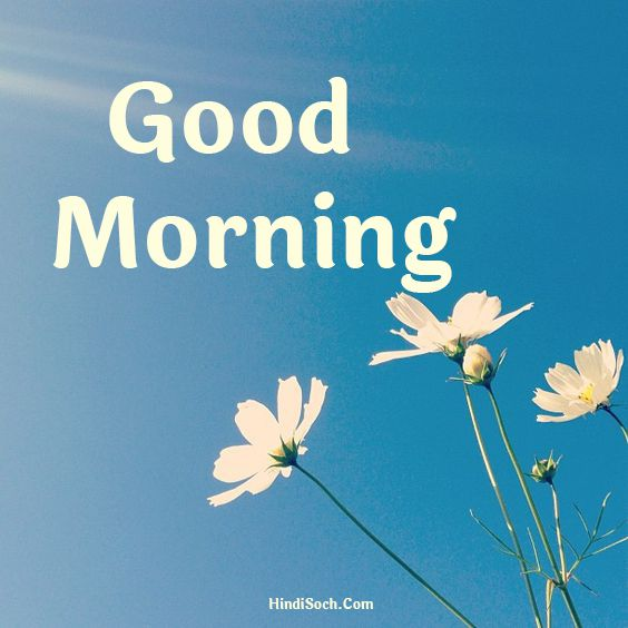 Happy Good Morning Images for Whatsapp