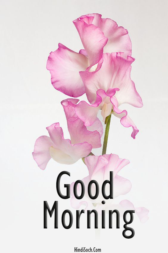 Happy Good Morning Photos for Instagram