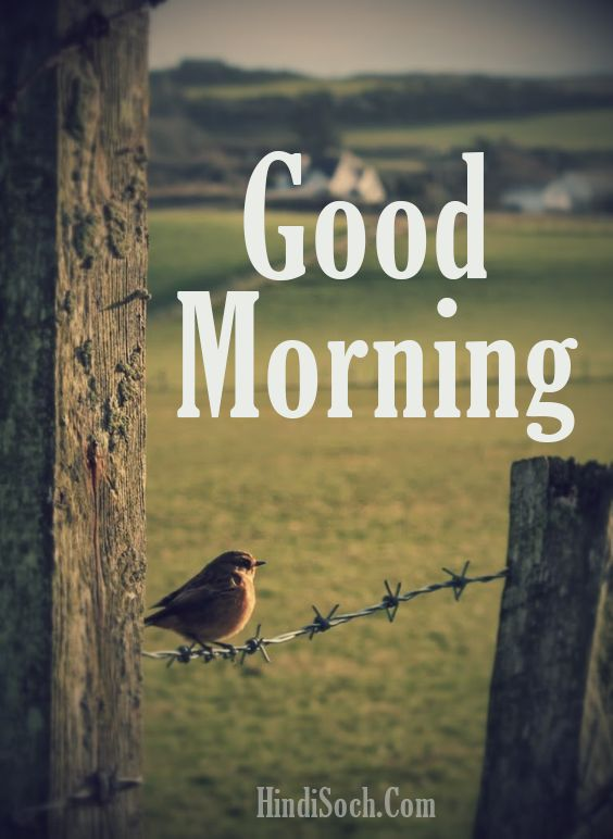 Morning Birds Good Morning Images in HD
