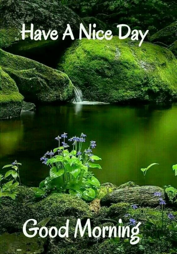 Beautiful Nature Good Morning Green Image Photo