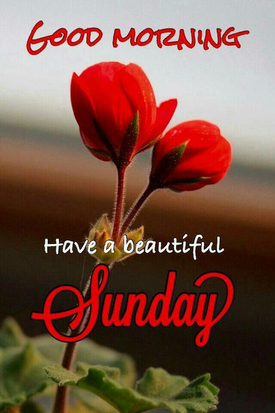 Beautiful Sunday Good Morning Holiday Image