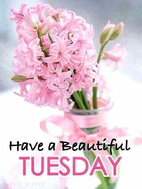 Beautiful Tuesday Wishes for Good Morning