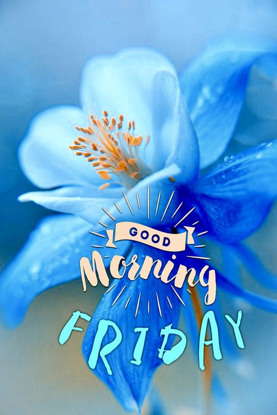 957+ Friday Good Morning Images Cards Photos & Wishes