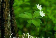 Good Morning Green Nature Photo Image Pic