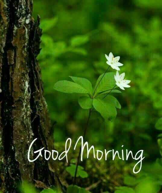Good Morning Green Nature Photo Image Pic