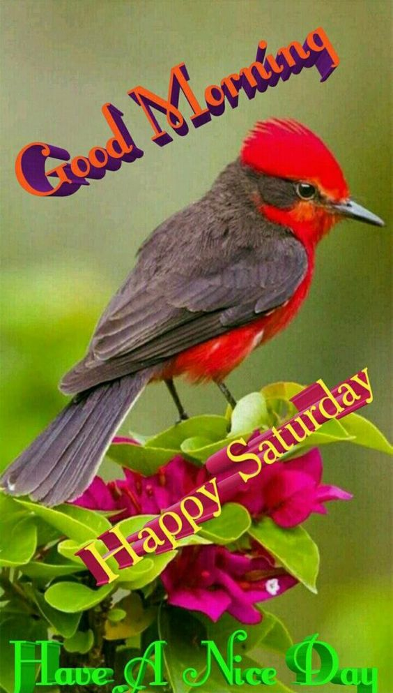 Good Morning Happy Saturday Image Pics Quote