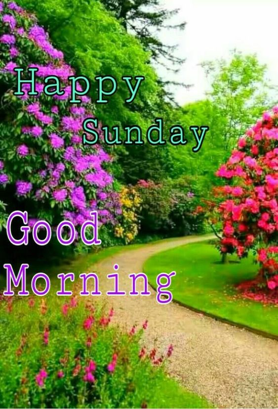 Good Morning Happy Sunday Image Pic