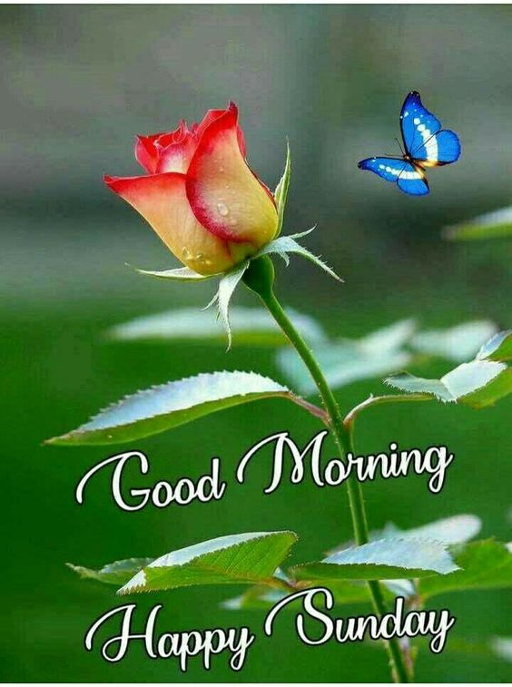 Good Morning Happy Sunday Image Wishes