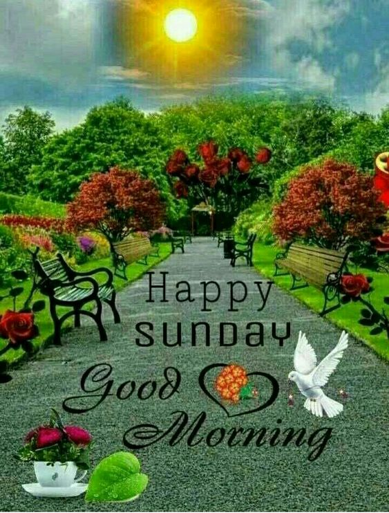 Good Morning Happy Sunday Wallpaper Pics