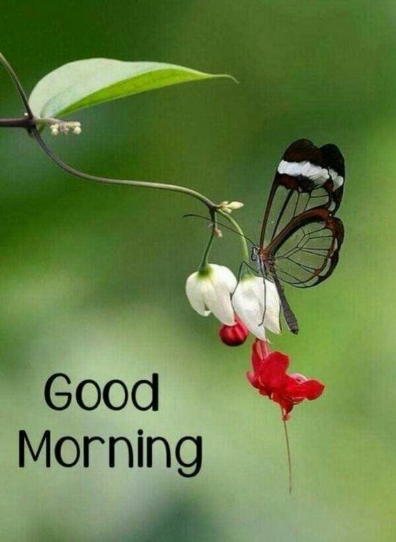 Good Morning Nature Butterfly Photo Image