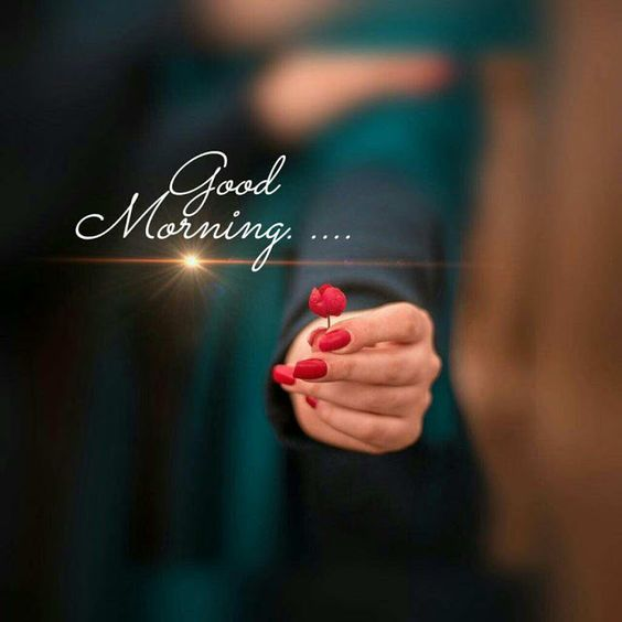 Good Morning Romantic Rose Photo Image