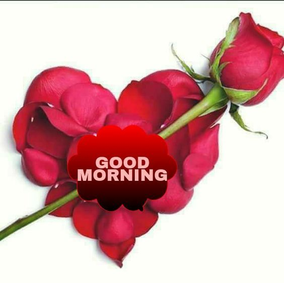 Good Morning Rose Romantic Pics