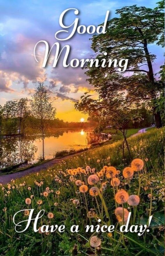 Good Morning Sun Shining Nature Photo Pictures