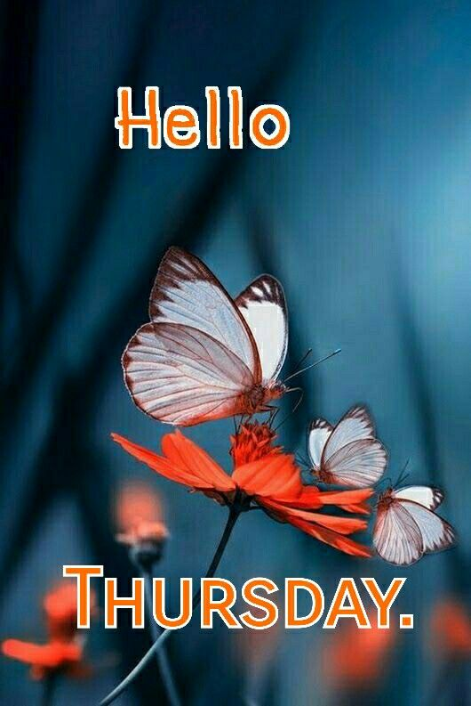 Good Morning Thursday Wallpaper Image