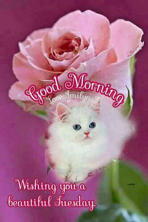 Good Morning Tuesday Image Cute Cat