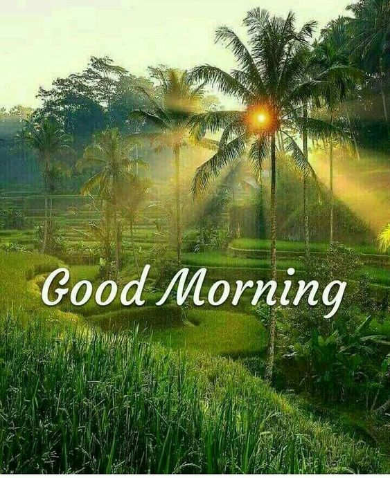 Happy Good Morning Nature Sun Photo Pic