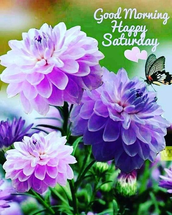 Happy Saturday Good Morning Quote Image