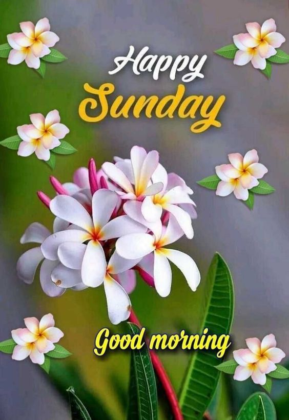 829+ Sunday Good Morning Images Quotes Pics Wishes in Hindi
