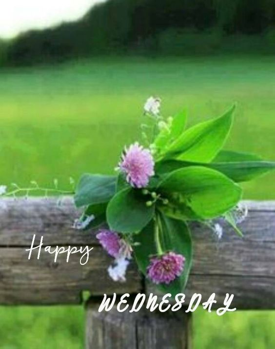 Happy Wednesday Good Morning HD Image