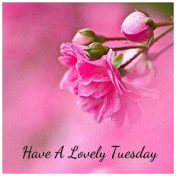 Lovely Tuesday Good Morning Image HD