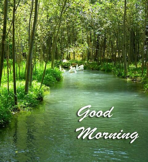 Nature Good Morning Wallpaper Image Photo