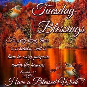 Tuesday Blessing Good Morning Image