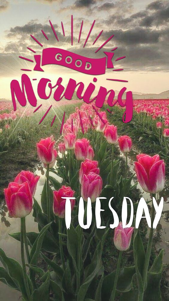 837+ Hello Tuesday Good Morning Images Photos Free Download