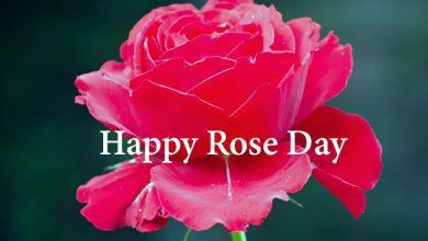Happy Rose Day Image for Shayari