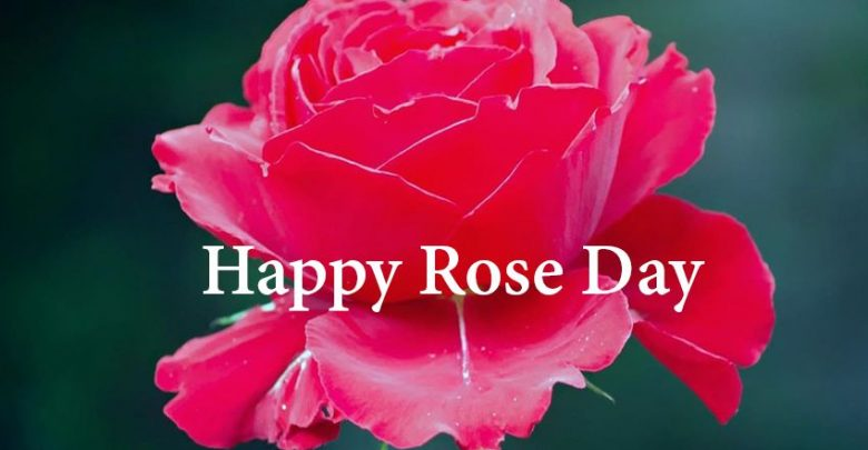 Happy Rose Day Shayari In Hindi ह प प र ज ड